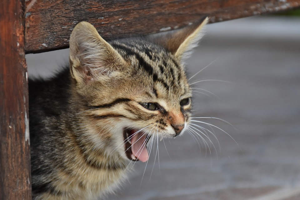 Katzengejammer
